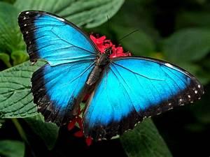 Butterfly Desktop Wallpapers  Butterflies