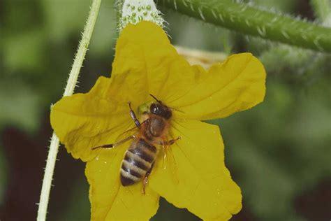 Bienen Und Andere Nützliche Gartenbewohner Mein