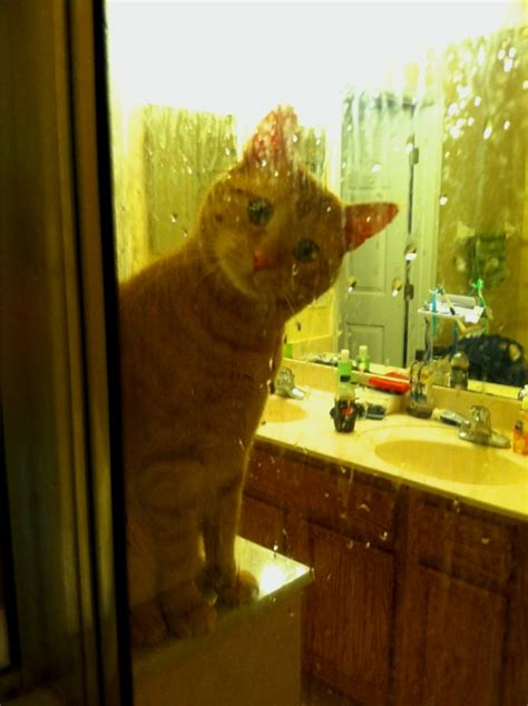 I Watched My Shower - time cat owner time being watched in the