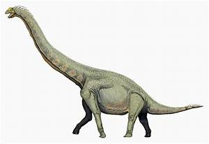 Some Sauropods Really Did Hold Their Long Necks High