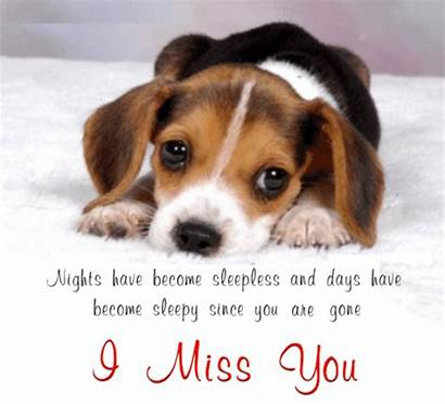 Miss Ecard Cards Card Pet Ecards Pets