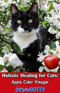 apple cider vinegar for cats holistic healing for cats apple cider vinegar playful kitty