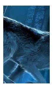Wolf Wallpaper Iphone - Iphone Wolf Wallpapers Kolpaper ...