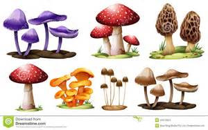 Different Mushroom Types Poisonous