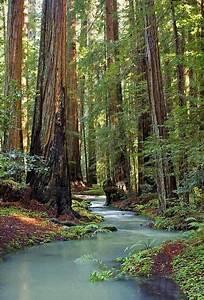 Redwood, Stream, Mendocino, County, California