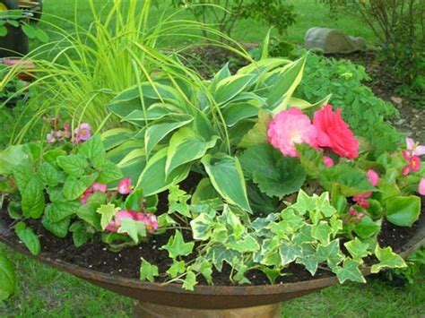 shade loving flowers for pots tips for planting successful containers