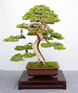 Chinesischer Wacholder Bonsai : hai yama ten m rz 2015 ~ Sanjose-hotels-ca.com Haus und Dekorationen