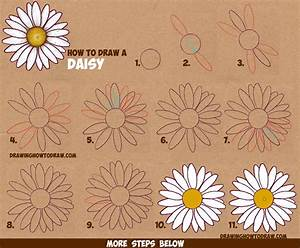 How to Draw a Daisy Flower (Daisies) in Easy Step by Step ...