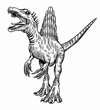 Spinosaurus Dinosaur Dinosaurs Illustration Sketch Drawing Godzilla