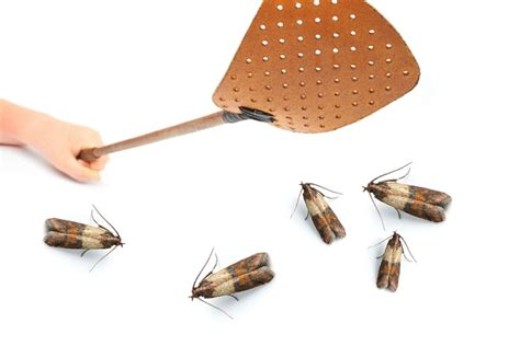 Moths In Pantry Where Do They Come From Top 10 Tips On How To Get Rid Of Pantry Moths Top Inspired