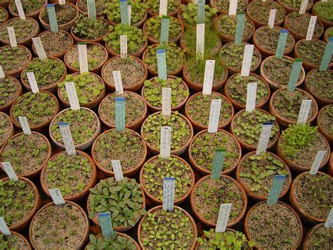 Botanischer Garten Berlin Erfahrung by Conservation Culture Bgbm