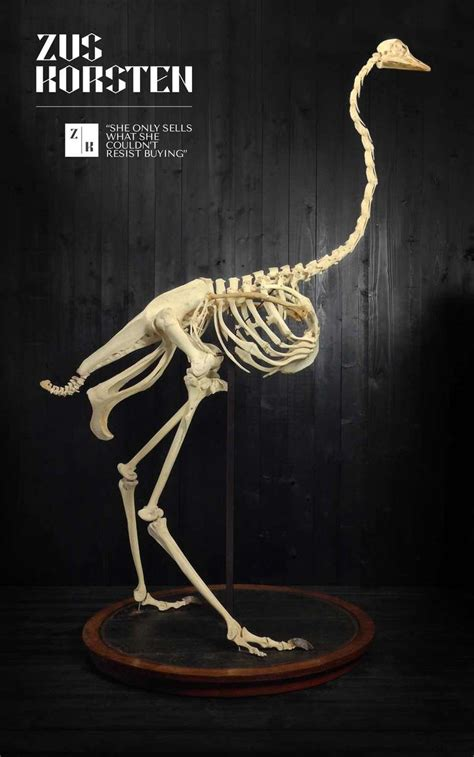 antique wood wing ostrich skeleton from museum at 1stdibs