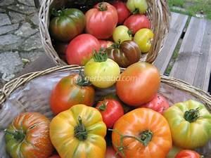 Quand Semer Les Tomates : quand planter les salades lune interesting salvatore ~ Melissatoandfro.com Idées de Décoration