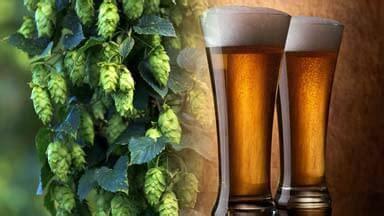 Hops Testing  Alcoholic Beverage Testing  Laboratory Grand Rapids