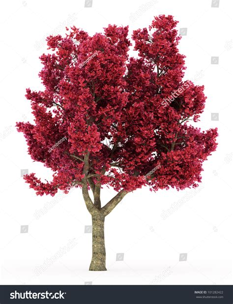 3d Cherry Tree Red Leaves Isolated Stock Illustration