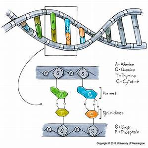 How Would One Explain Genetics To A Layman  What Is Dna