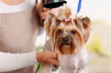 dog groomer jobs   petswithloveus