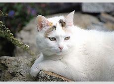 Die Katze harrt stolz der Dinge, die da kommen, Fotos von