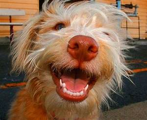 animals smiling on Pinterest | Smiling Animals, Smile and ...