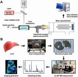 A  Principle And  B  Workflow Of Imaging Mass