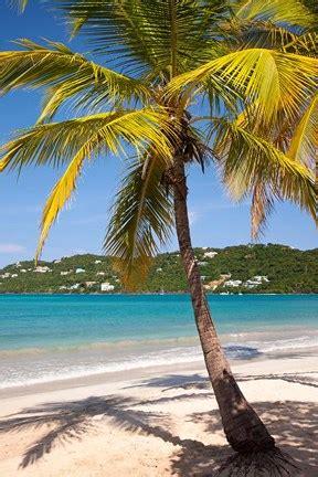 megans bay beach st thomas  virgin islands fine art