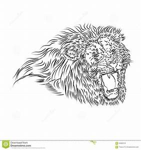 Line Drawing Of A Roaring Lion Stock Illustration - Image ...