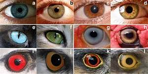 Shades Of Green Eyes Chart Variability Of Eye Coloration In Humans And Animals On