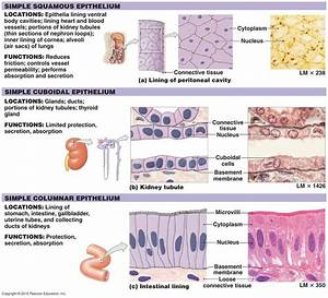 1000  Images About A U0026p Biology On Pinterest