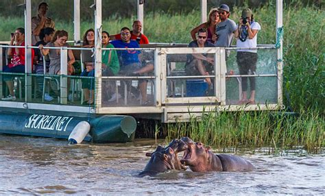 Boat Cruise South Africa by Hippo Croc Boat Cruise St Lucia St Lucia South Africa