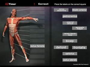 Anatomy Game Muscles