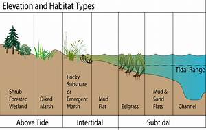 Snail Habitat Diagrams