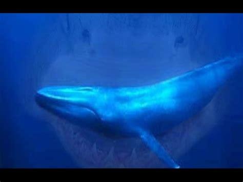 real gigantic megalodon shark caught  camera