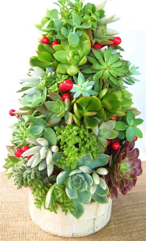 succulent christmas tree topiary centerpiece traditional