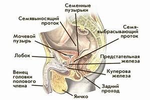 Лечение папилломы на половом органе