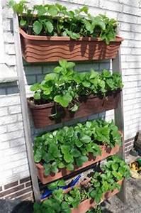 die 25 besten ideen zu erdbeeren pflanzen auf pinterest With katzennetz balkon mit mr gardener hochbeet arezzo