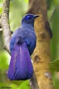 Blue Bird Species