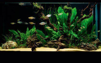 set   simple  stunning planted tank