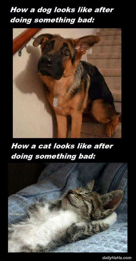 cats dogs vs difference funny between dog cat bad something doing dailyhaha humor pet true upload eat clear text looks