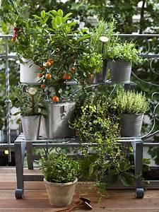 gemuse und krauter auf dem balkon balkon pinterest With kräutergarten balkon ideen