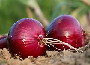 Cebolla  Propiedades Y Beneficios De Esta Hortaliza