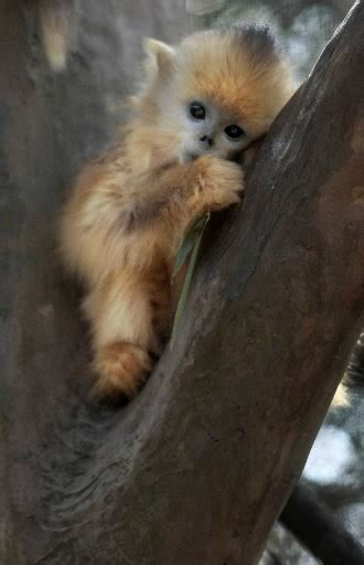 Collections Cute Monkeys Pics Images And Wallpapers