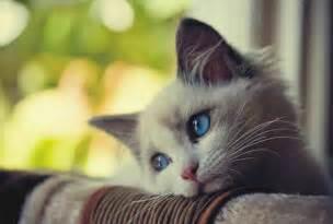 Image result for images of sad cat
