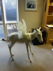 Real Unicorn Horse Pegasus