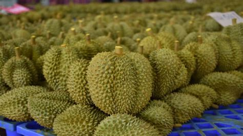 จีนไฟเขียวเปิดด่านนำเข้าผลไม้ไทยเพิ่มให้ 2 ด่าน เริ่ม เม. ย. นี้