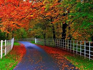 forests, parks, trees, leaves, roads, fences, natural, beauty, of, autumn, , , wallpapers13, com