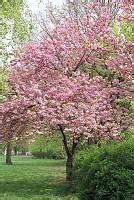 Rosa Blüten Baum : baum fotoarchiv trees ~ Yasmunasinghe.com Haus und Dekorationen
