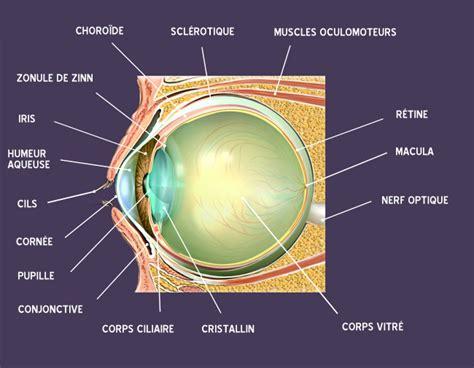sch 233 ma de l oeil le guide de la vue