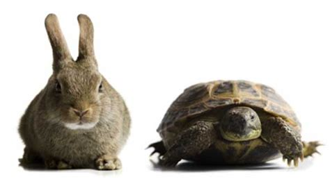 tortoise   hare lifestyle changing approach