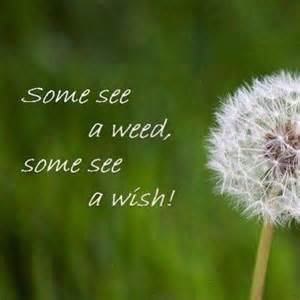 some see a some see a wish pictures photos and images for