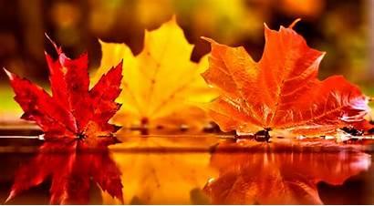 November Wallpapers Fall Autumn Desktop Leaves Falling